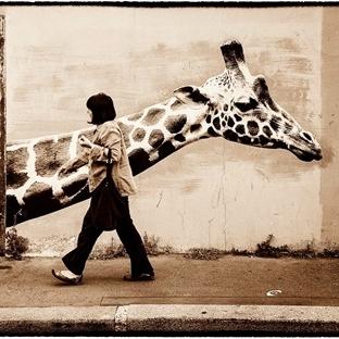 Yolda karşınıza zürafa çıkarsa?