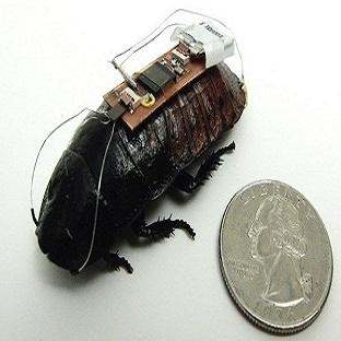 Hamam Böceğinin Hareketine Yön Verdiler !