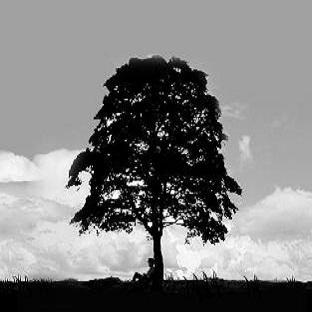 Kahve Falında Ağaç Ve Anlamları