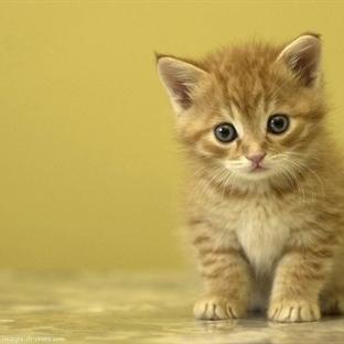 Kedilerle İlgili Şaşırtıcı 10 Gerçek