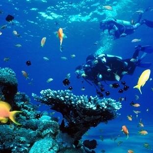 Kızıldeniz Mercan Resiflerine Dalış İçin Bilgiler