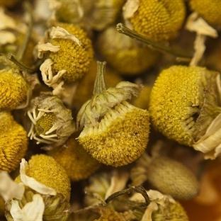 Sonbahar ve  Kışta  cildiniz İçin Bitki Çayları