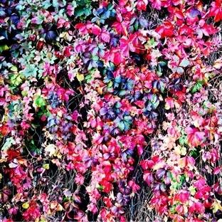 Sonbaharın Sessizliği