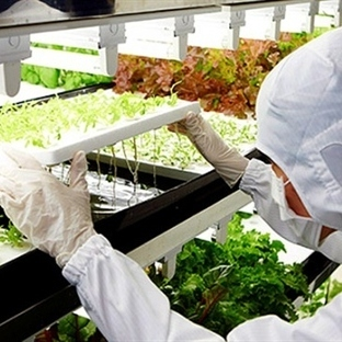 Toshiba, yıkanmadan yenebilen sebze yetiştirecek