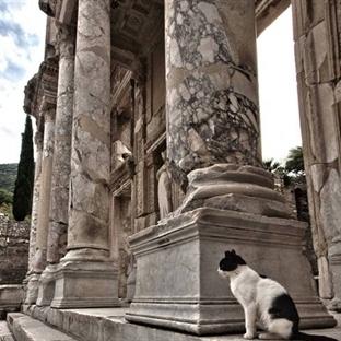 Türkiye'nin Turistik Yerlerine Aşık 6 Kedi