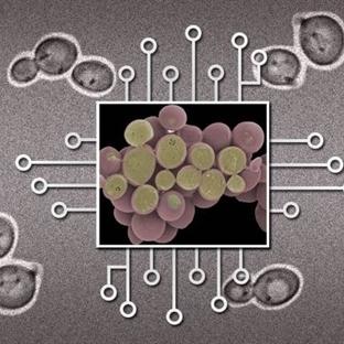 Biyo-Devreleri Pratik Hayata Geçirecek Gelişme