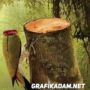 Doğa Tek Parçadır!