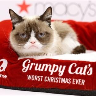 Grumpy Cat'in Serveti 100 Milyon Dolara Dayandı