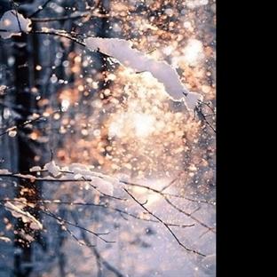 Kar Yağmışsa Tadını Çıkarın