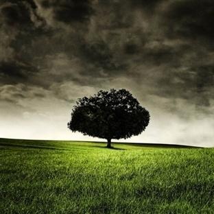 """Karakterinizdeki """"Gizem"""" Ağaçlarda Gizli"""