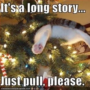 Kedilerin Yılbaşı Ağacı İle İmtihanı!