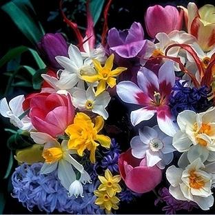 Kışın Ekilebilecek En Güzel Çiçekler!
