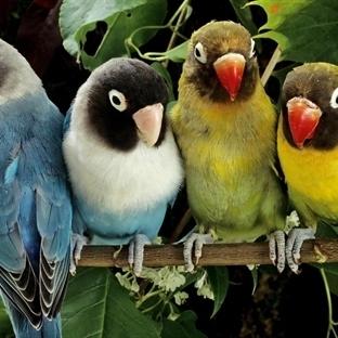 Kuşların Tırnakları Nasıl Kesilir ?