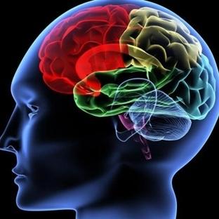 İnsan Beyninin İçindeki Navigasyon Sistemi