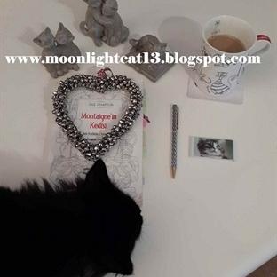 Okuma Halleri, Fotoğraflarla - Montaigne'in Kedisi