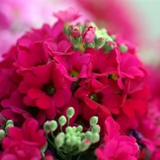14 Şubat Öncesi Çiçeklerin Anlamlarını Öğrenin