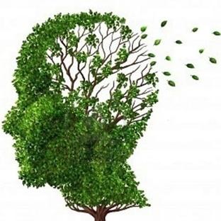 Alzheimera bitkisel savaş