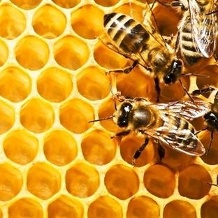 Arı poleninin insan sağlığı üzerindeki etkileri