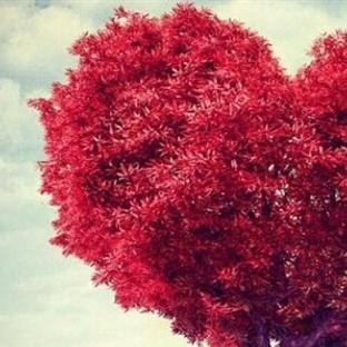 Aşk üzerine söylenmiş sözler
