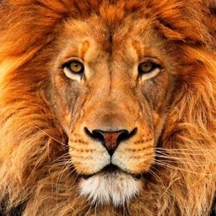 Aslan ile Karşılaşırsanız Ne Yapmalısınız?