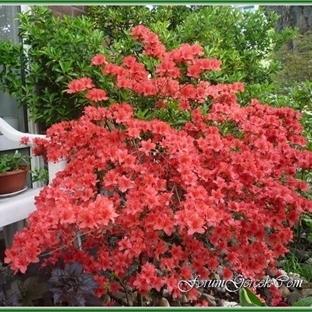 Bahçemde Dört Mevsim