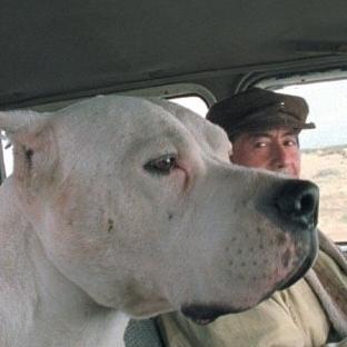 Bonbon Köpek - Sıcacık Bir Arjantin Filmi