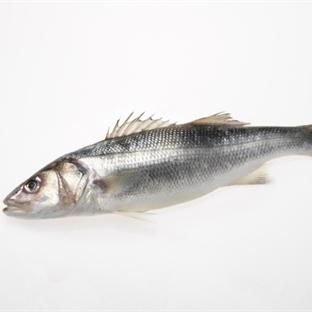 Bu Balıkları Yemeden Önce Bir Daha Düşünün