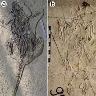Çindeki Fosiller Pompeii Gibi Taşlaşmıştı