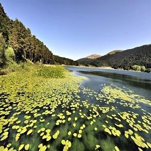 Doğanın Dizginlenmiş Güzelliği: Abant