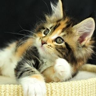Dünya Kedi Gününüz Kutlu Olsun