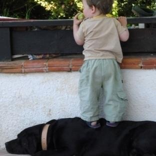 Evcil hayvanın çocuklara olan faydaları