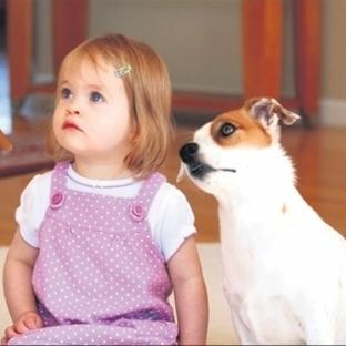Evcil Hayvanlar Sağlığınız İçin Tehlike Oluşturabi
