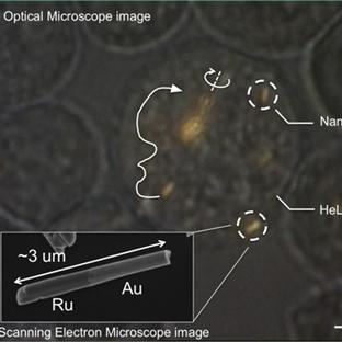 Nanomotorlar İlk Kez Canlı Hücrede Kullanıldı