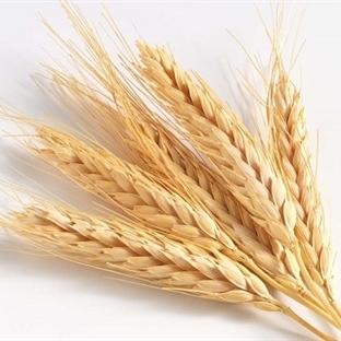 İşlenmiş Yiyeceklerden Kaçış: Tam gıdalar