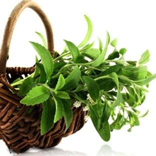 Stevia Bitkisi, Doğal Tadlandırıcı Şeker Otu