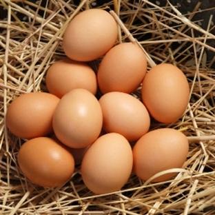 Yumurta Hakkında Bilmeniz Gerekenler