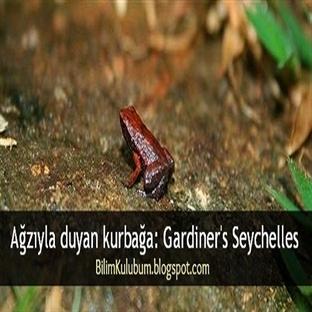 Ağzıyla duyan kurbağa: Gardiner's Seychelles