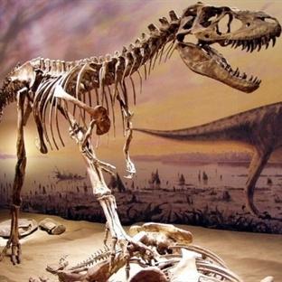 Alaska'lı Yeni Dinozor: Nanuqsaurus