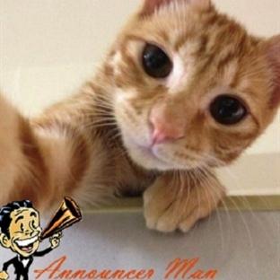 Birbirinden Eğlenceli Kedi Selfie'leri