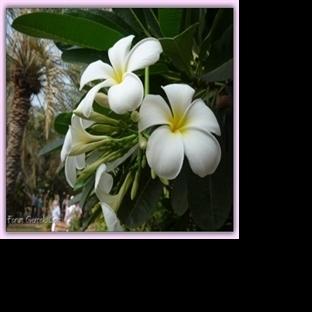 Canan'ın Objektifinden Çeşitli Çiçekler