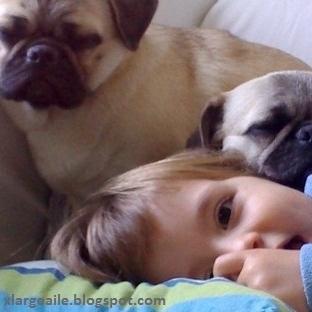 """""""Çocuğum köpek istiyor"""" - anne babalara bir rehber"""