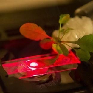 Dünyanın İlk Nano Biyonik Bitkisi Üretildi