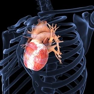 Gerçek Kalp Dokusu Gibi Atan Doku Yapıldı
