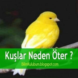 Kuşlar Neden Öter?