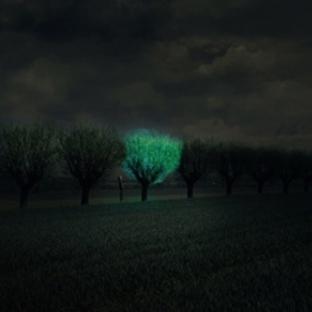 Lamba Ağaçlar ve Parlayan Yollar