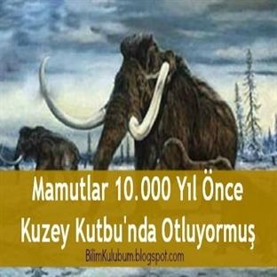 Mamutlar 10.000 Yıl Önce Kuzey Kutbunda Otluyormuş