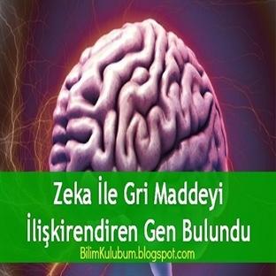 Zeka İle Gri Maddeyi İlişkirendiren Gen Bulundu
