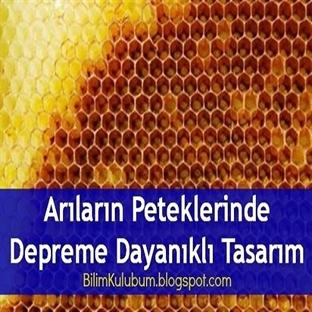 Arıların Peteklerinde Depreme Dayanıklı Tasarım