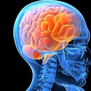 Beynin En İşlevsel Yaşı 24