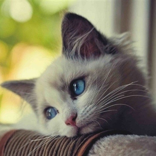 Bu kediler çok sevimli